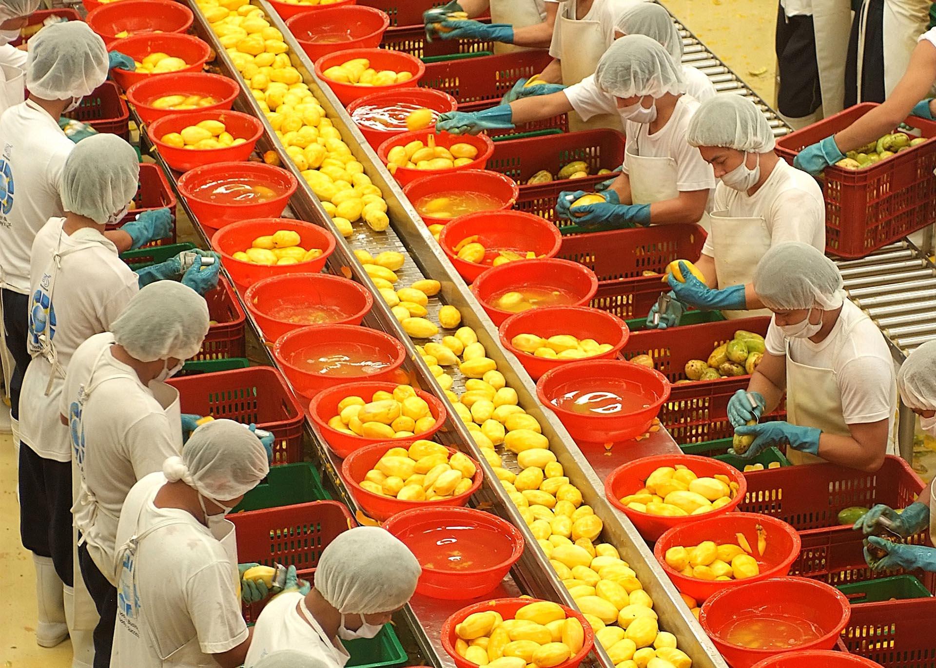 Jak se připravuje sušené mango
